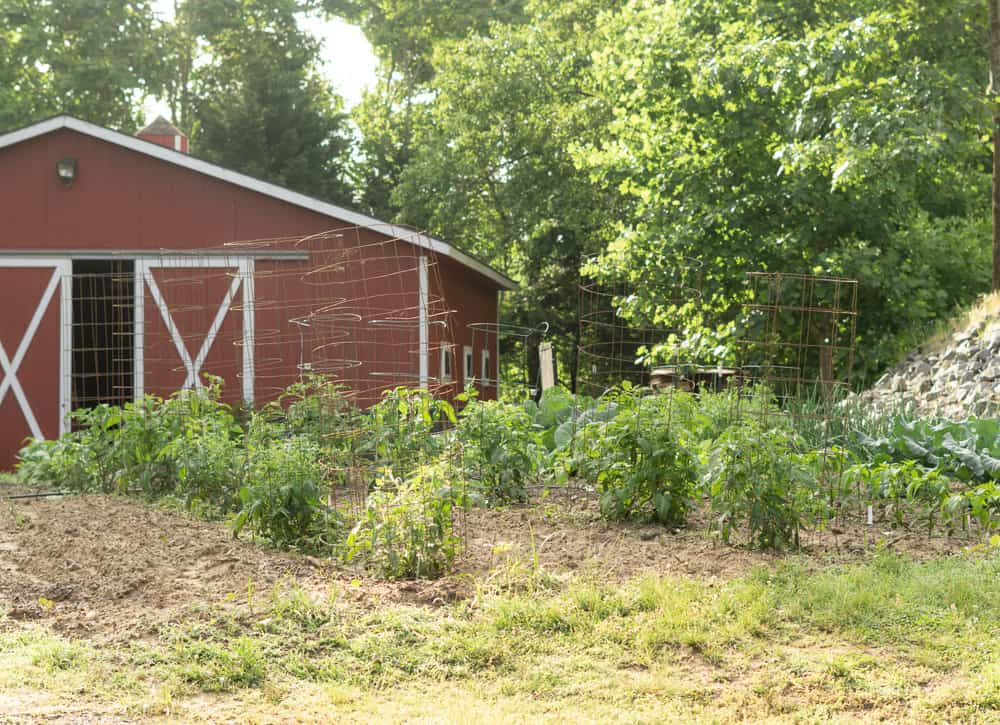 wide row vegetable garden in front of barn