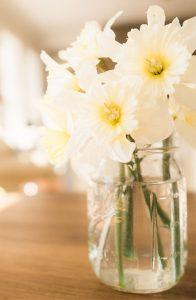 daffodils in mason jar