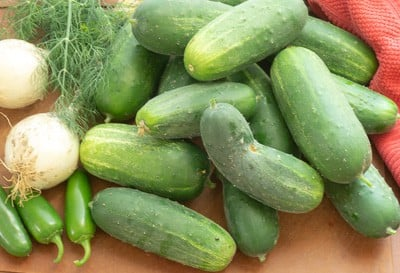 pickling cucumbers, onions, jalapeños, and fresh dill from garden on wooden cutting board