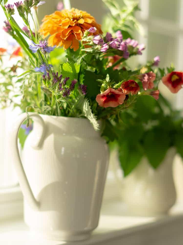 white pitcher on windowsill filled with orange zinnia and petunias