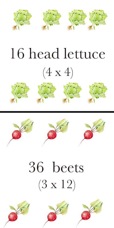 garden layout with lettuce and beets