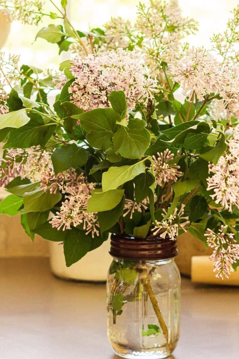 mason jar of lilacs on kitchen counter