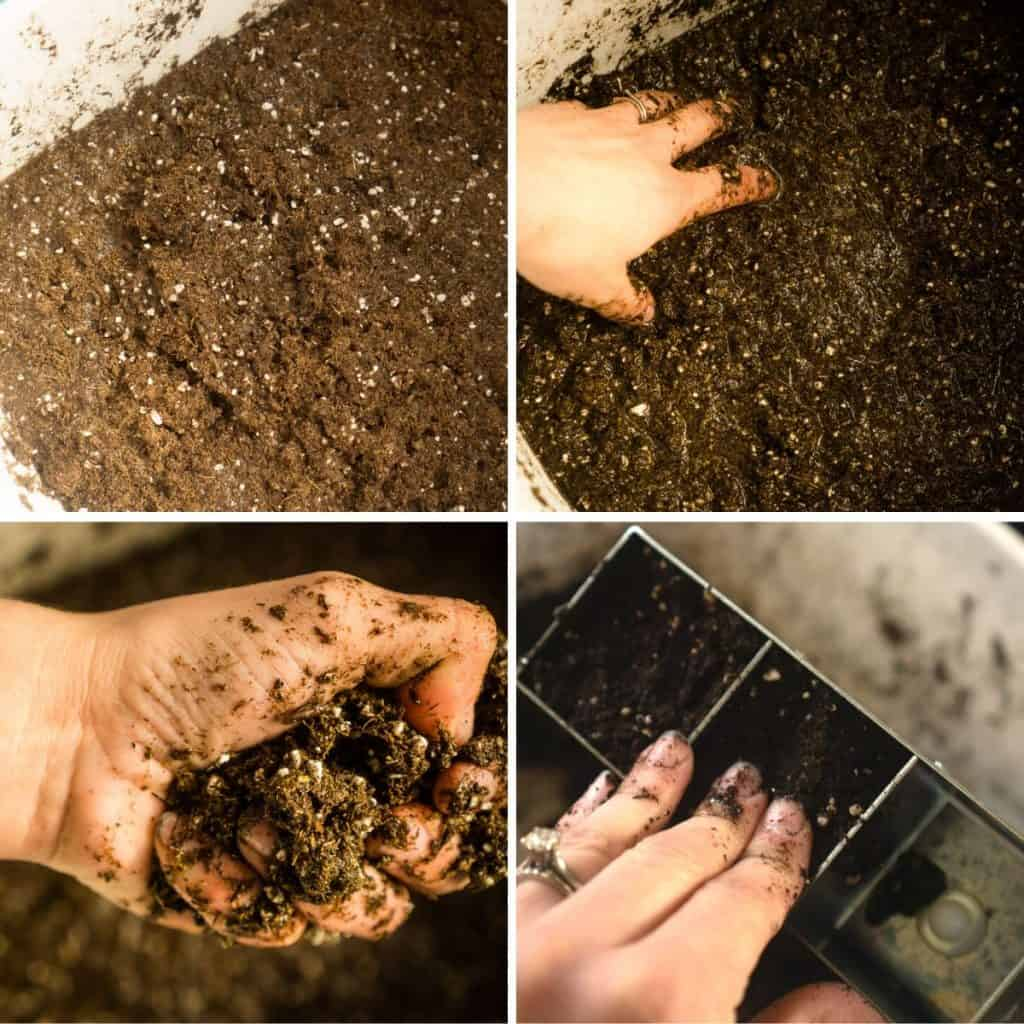 wetting soil mix, squeezing hand, and pressing into soil blocker