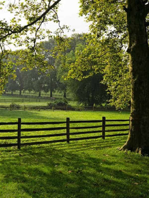 country scene with trees and fence