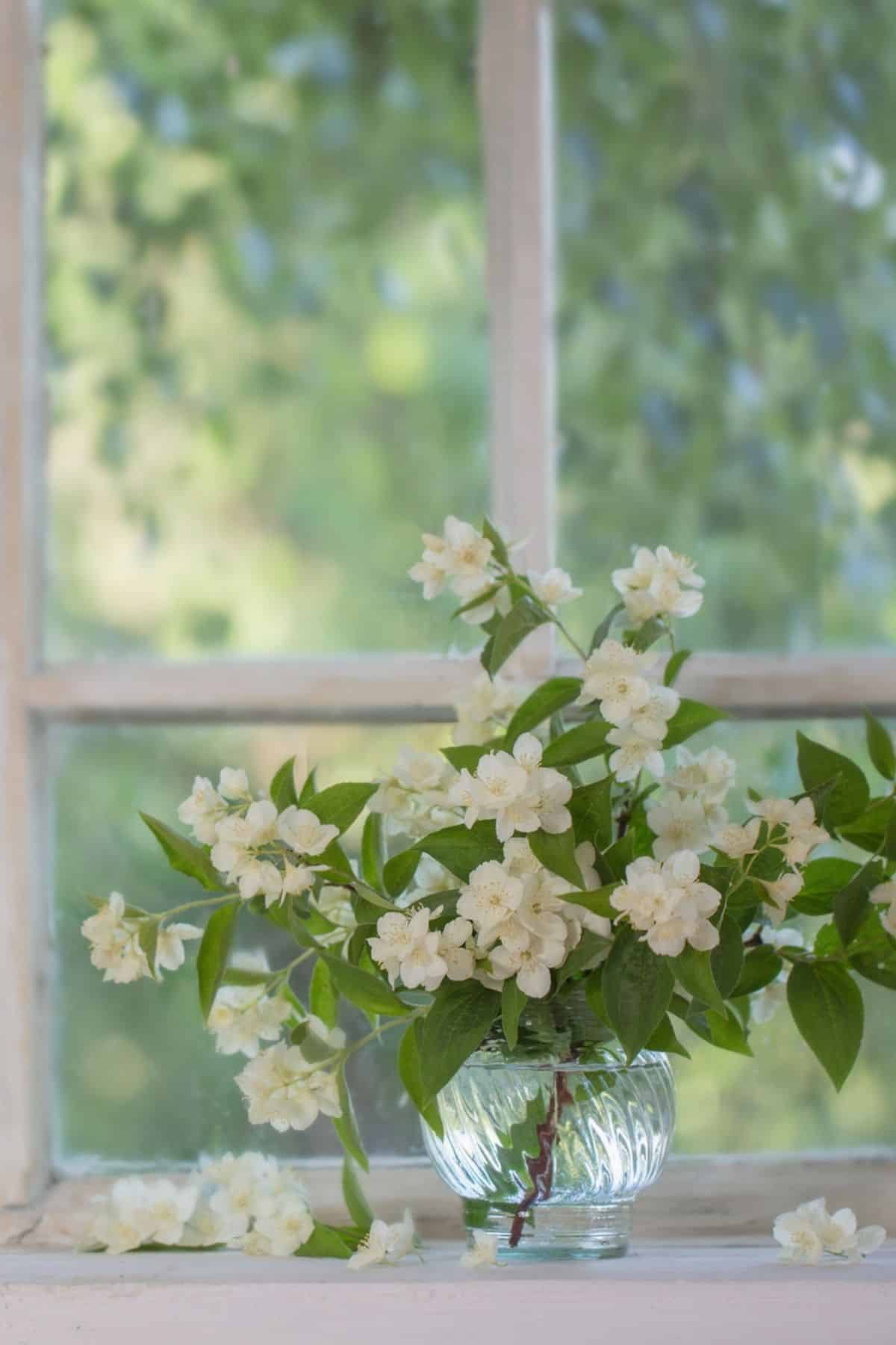 old fashioned window with white flowers in sill