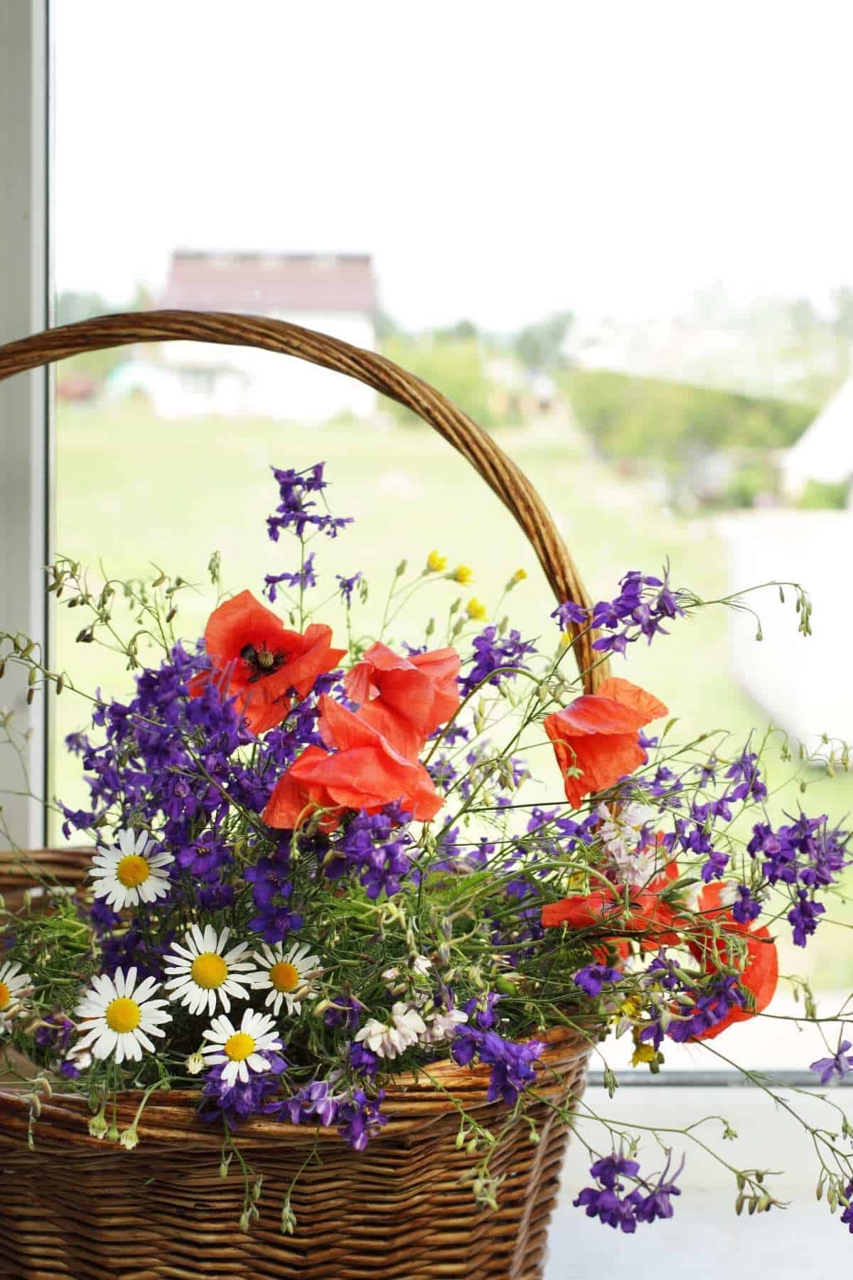 basket filled with red white and blue wildflowers in windowsills